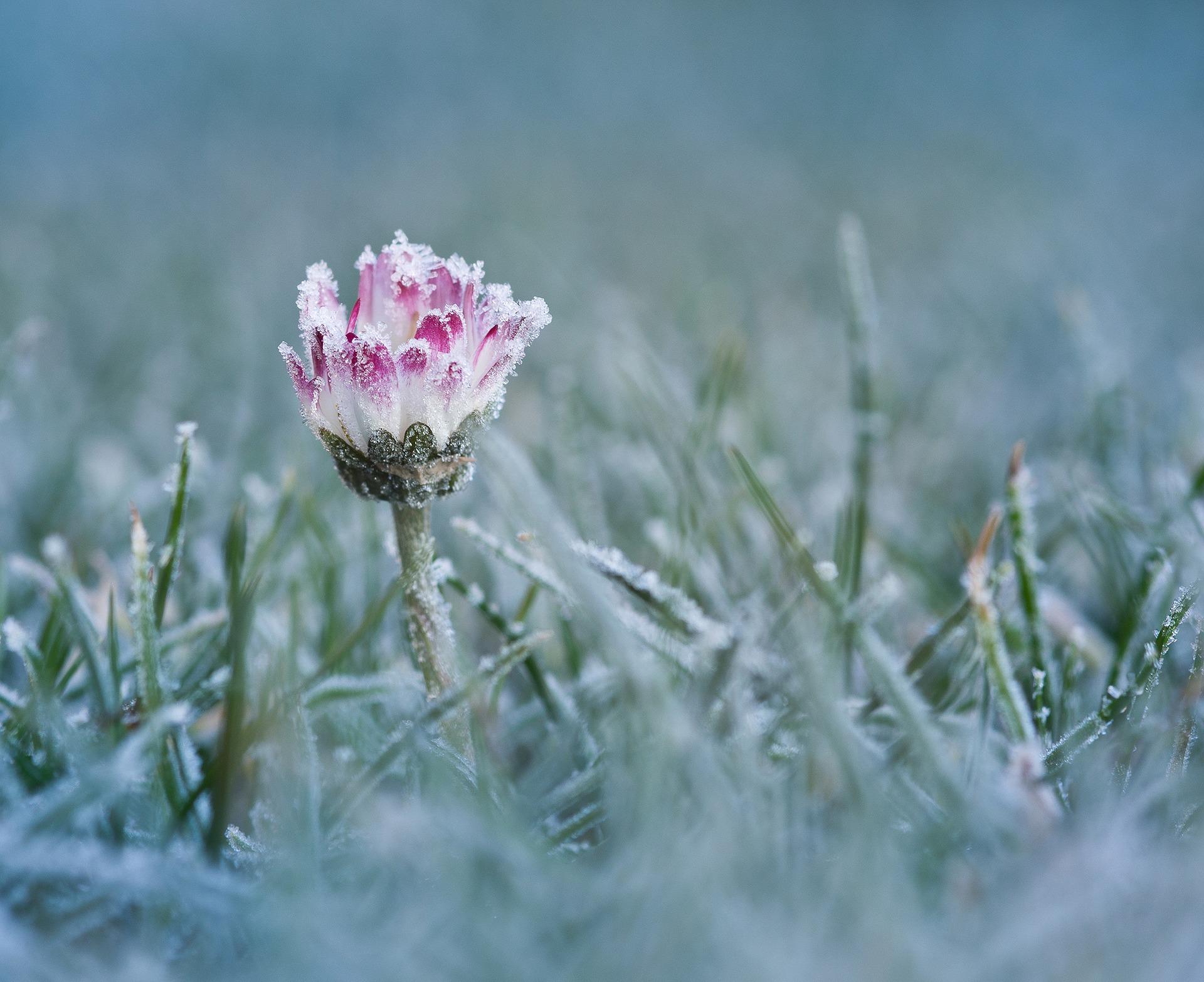 Gänseblümchen Winter