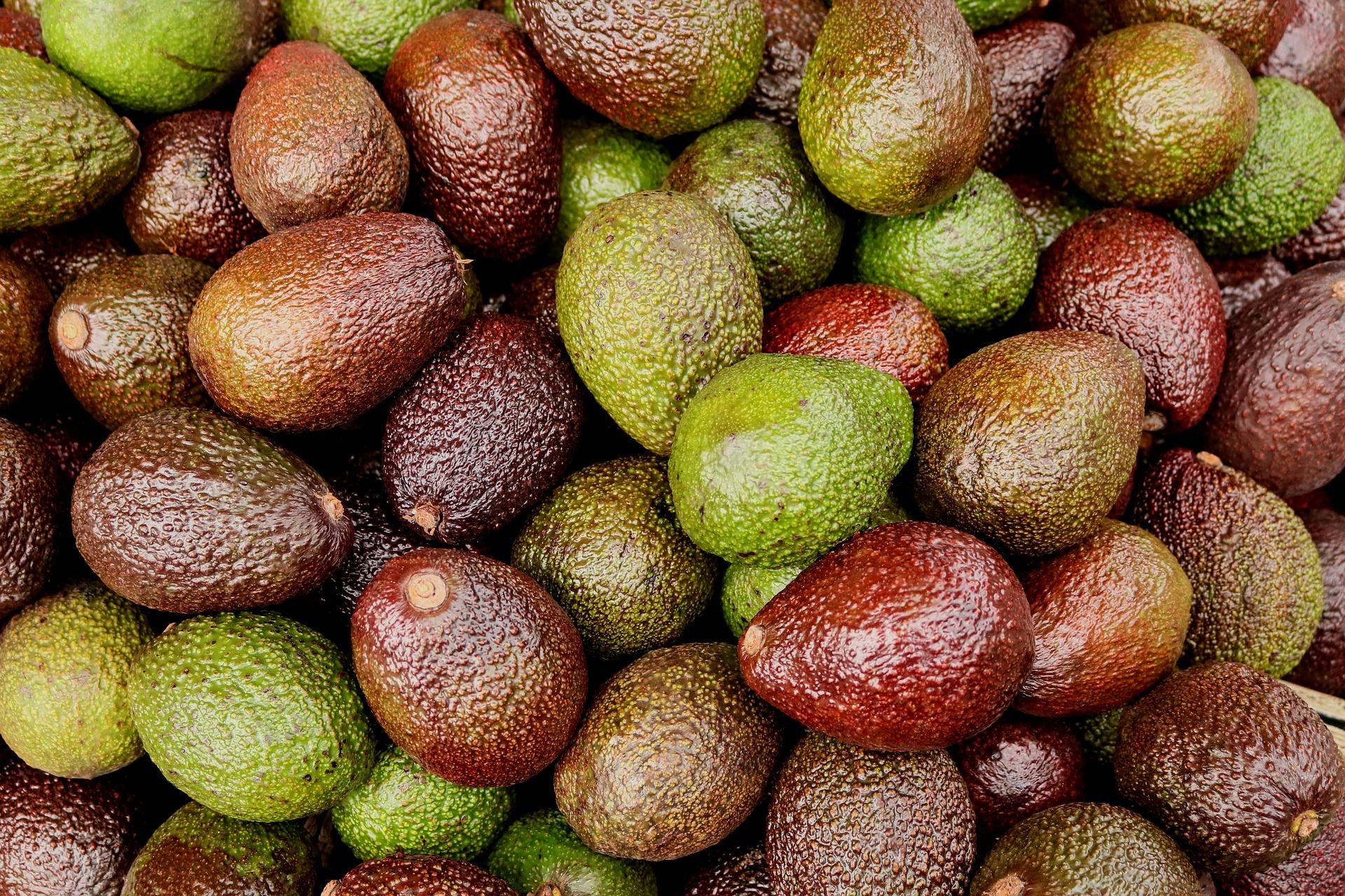 Avocado Reifung