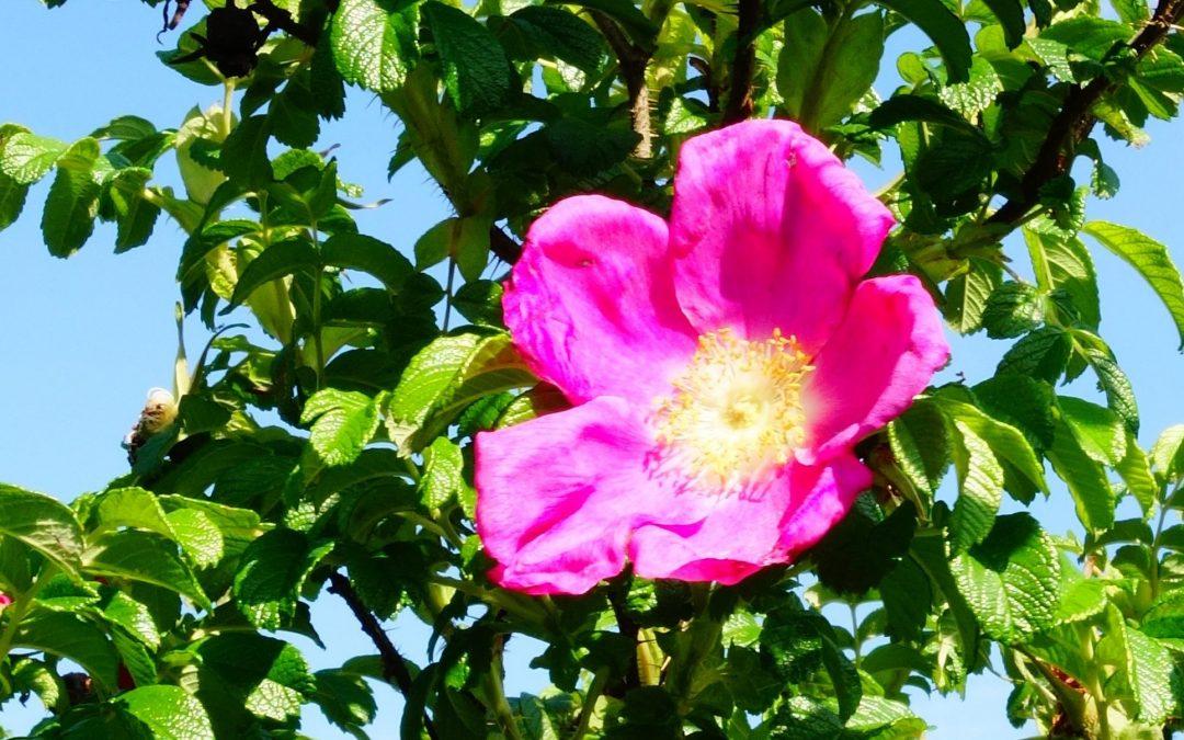 3. Juli, 14:00 Uhr: Sommerlicher Kräuterspaziergang